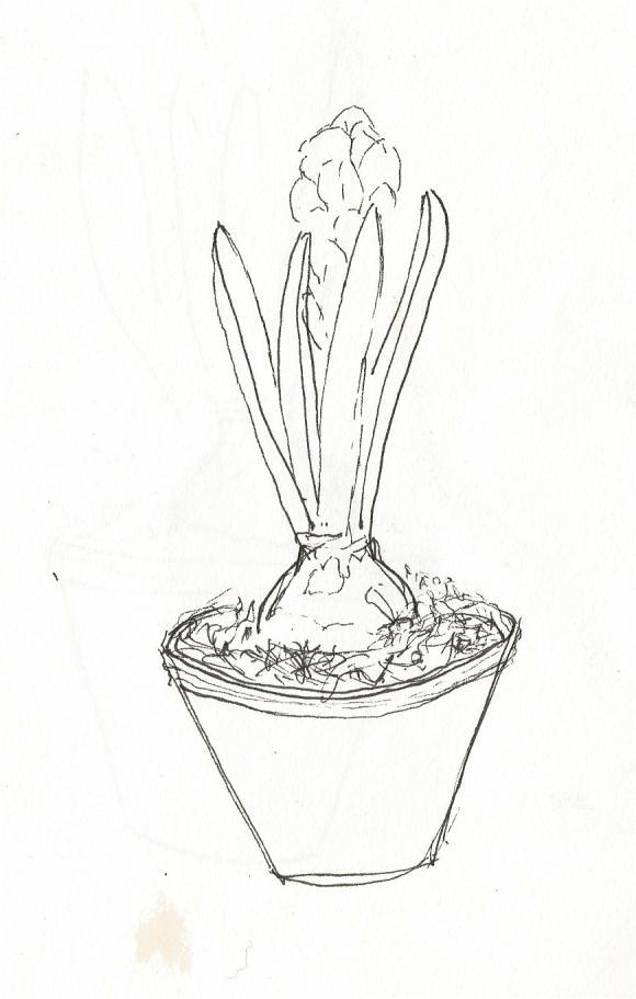 http://cyt.cowblog.fr/images/plante/plante.jpg